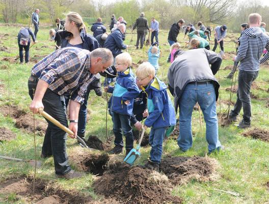 Neuer Klimawald wird gepflanzt in Gadeland. Foto: SWN/Stiftung Klimawald