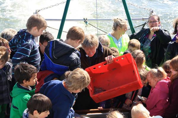 """Die Kinder haben Spaß beim """"Seetierfang"""". Foto: Sonja Wenzel"""