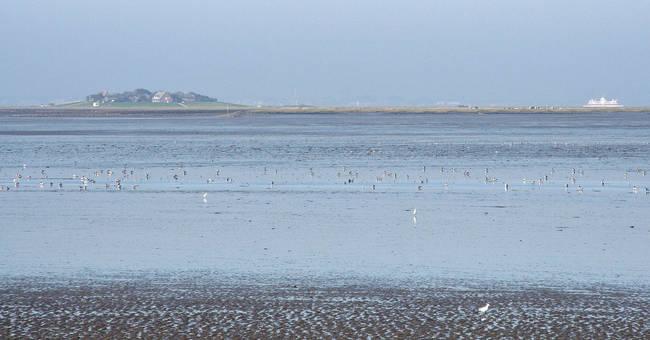 Das schleswig-holsteinische Wattenmeer wird künftig auch durch eine Stiftung betreut. Foto: Henze