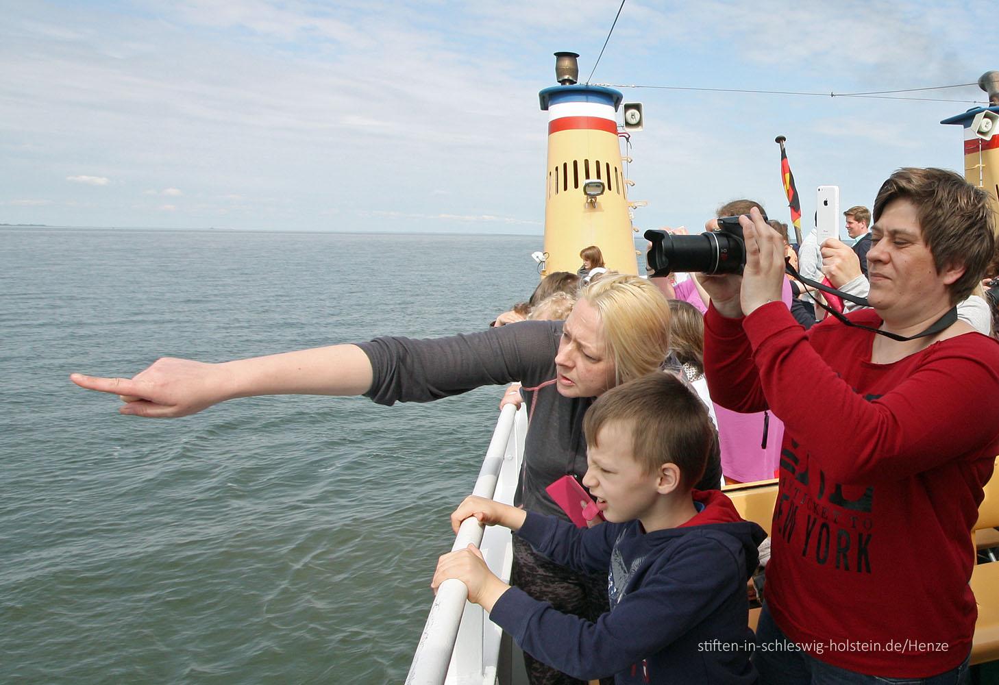 """""""Da sind die Seehunde!"""". Fotos: Henze"""